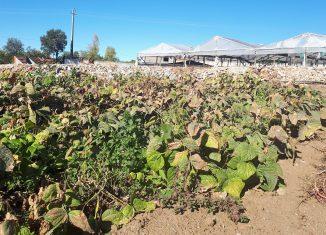 Cerca de 95% dos agricultores foram afetados pela seca no Alto Alentejo
