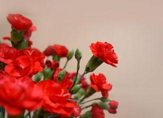 Portalegre comemora o dia 25 de abril