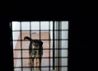 Adoções aumentam no canil e gatil de Portalegre